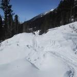 Trail through the debris