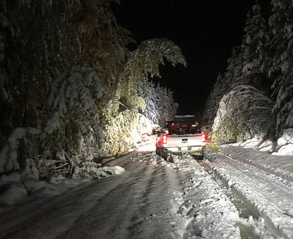 Heavy snow and trees down